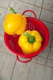 Orange paprika Stock Photography