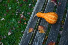 Orange pear-shaped ornamental gourd lies on rustic wooden bench Royalty Free Stock Photography