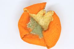 Orange peel with mold royalty free stock photography