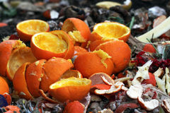 Orange peels. On a compost heap Royalty Free Stock Image