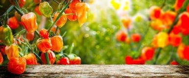 Orange peperoni bak en träsnitt Fotografering för Bildbyråer