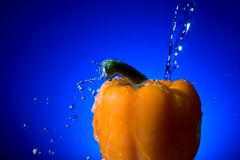 Orange Pepper. An orange pepper against a blue background being cleaned with fresh water stock photos