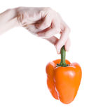 Orange pepper in hand Royalty Free Stock Images