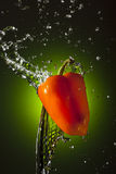 Orange Pepper Splash Royalty Free Stock Photo