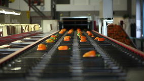 Orange peppers on a conveyor stock video
