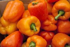 Orange peppers on market Royalty Free Stock Photo
