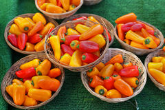 Orange peppers Royalty Free Stock Image