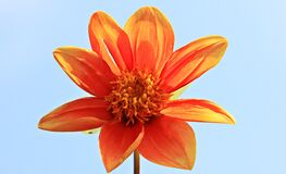 Orange Petal Flower Royalty Free Stock Photos