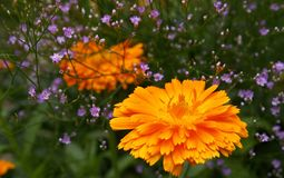 Orange Petaled Flower Stock Photos