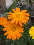 Orange Petaled Flower Stock Photo