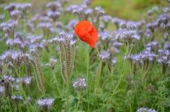 Orange Petaled Flower over Green Grass Royalty Free Stock Images