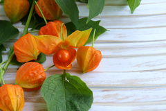 Orange physalis berries Stock Image