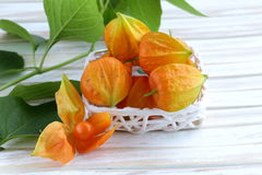 Orange physalis berries Royalty Free Stock Photography