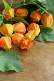 Orange physalis berries Royalty Free Stock Photo