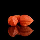 Orange Physalis on a black Royalty Free Stock Photos