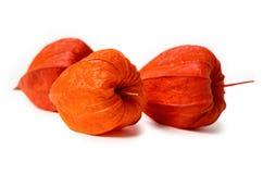 Orange physalis isolated Royalty Free Stock Image