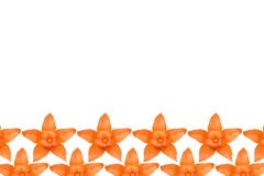 Orange physalis pattern background, flat lay with copy space stock illustration