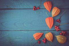 Orange physalis with red berries on the  wooden cyan table Stock Photos