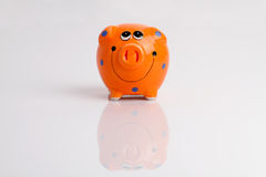 Orange pig with reflection. On the table Stock Photos