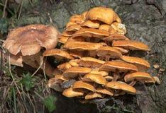 Orange Pilz Lizenzfreies Stockbild