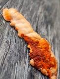 Orange Pilz auf Holz Stockfoto
