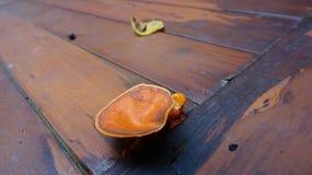 Orange Pilz wächst auf einem hölzernen Sofa lizenzfreie stockfotos