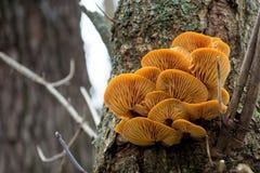 Orange Pilze in einer Barke auf einem Baum stockfoto
