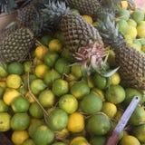 Orange pinepal Royalty Free Stock Image