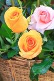 Orange Pink beautiful rose in basket Stock Images