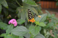 Pretty butterfly on a leaf. Orange pink flower green branch Stock Image