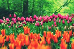 Orange and Pink Flowers during Daytime royalty free stock photos