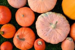 Orange and pink pumpkins Stock Photos