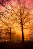 Orange and pink sunset over foggy pond with trees