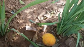Orange and plant Stock Photography