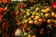Orange plant with red ribbons Stock Photo
