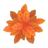 Orange plant or tree, top view. Vector illustration, isolated on white. Royalty Free Stock Photos
