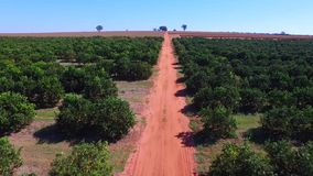 Orange plantation aerial view in Sao Paulo State - Brazil  stock video footage