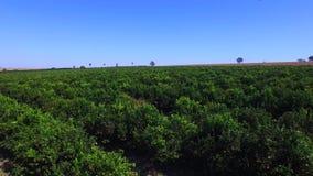 Orange plantation aerial view in Sao Paulo State - Brazil stock footage