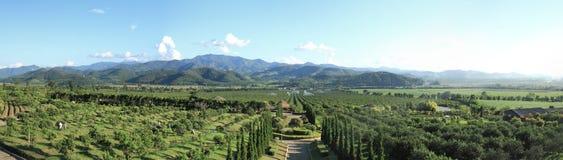 Orange plantation panorama Royalty Free Stock Image