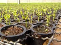 Orange plantor royaltyfria foton