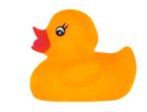 Orange plastic duck Stock Image