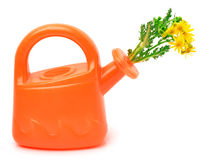Orange plastic watering can with flowers Royalty Free Stock Photo