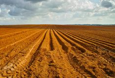 Orange plowed field in perspective in cloudy day Stock Images