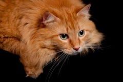 orange posera för förtjusande kamerakattpott Royaltyfri Bild