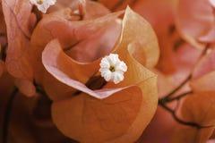 Orange power. Orange envelope with small white blooms inside Stock Photo