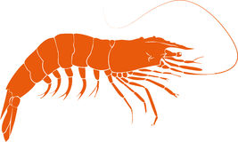 Orange prawn illustration Royalty Free Stock Photography