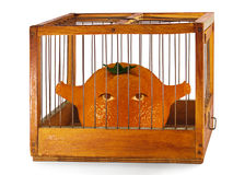 Orange, prisoner in the cage. Orange, prisoner in the cage made of wood with iron rods, isolated stock image
