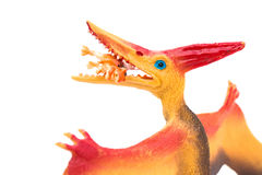 Orange pterosaurs catches a smaller dinosaur toy on white Royalty Free Stock Photos