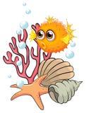 An orange puffer fish near the seashells Stock Image