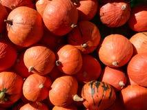 Orange pumkins Lizenzfreies Stockfoto